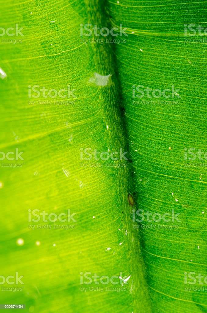 Dew on a green leaf Beautifully detailed foto de stock royalty-free