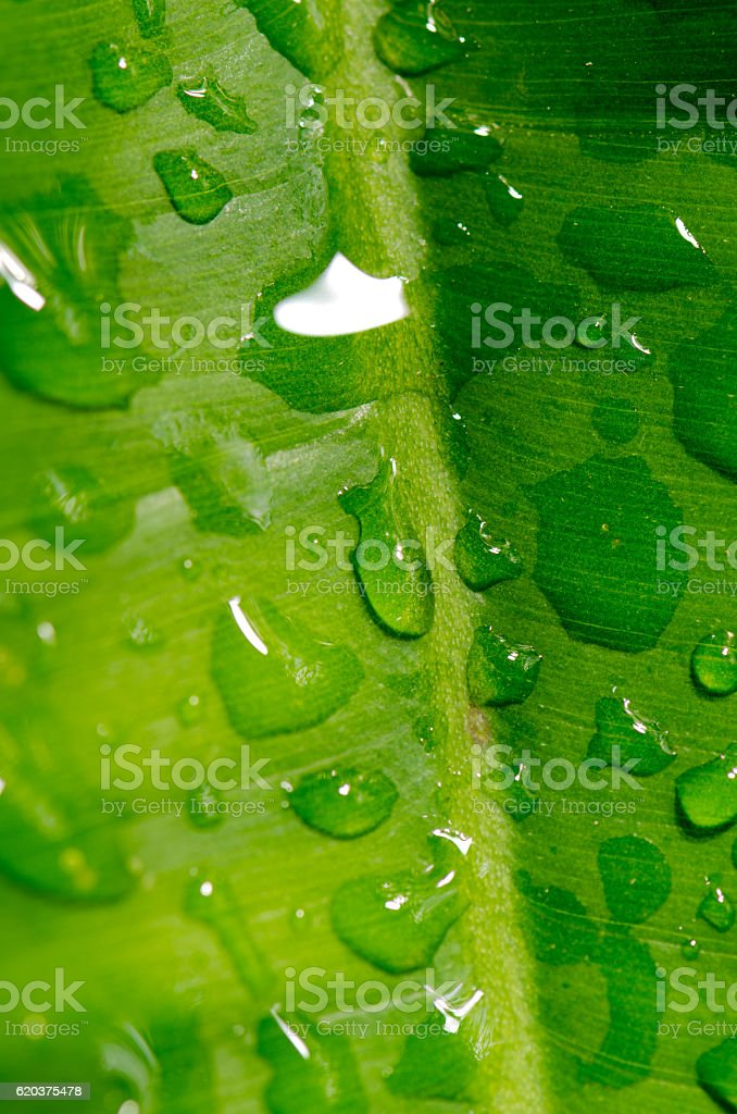 Dew on a green leaf Beautifully detailed zbiór zdjęć royalty-free