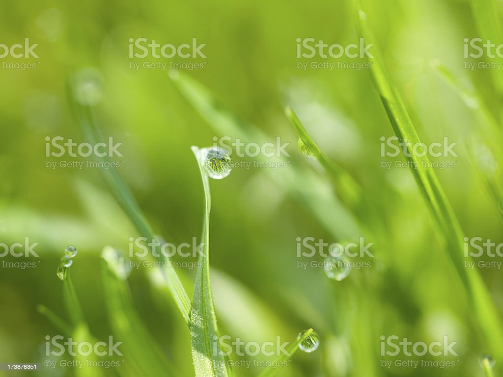 Dew on grass reflecting more blades stock photo