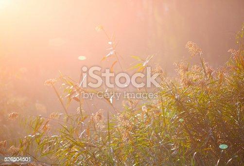 istock dew on green grass 526504501