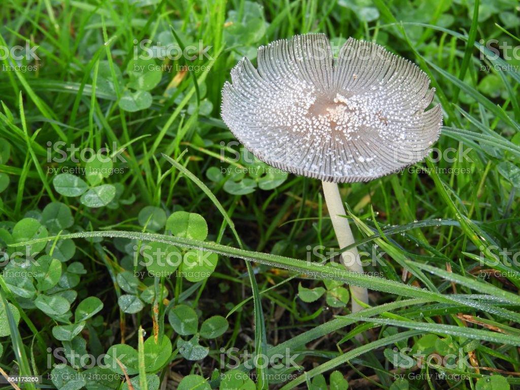 Dew on mushroom royalty-free stock photo