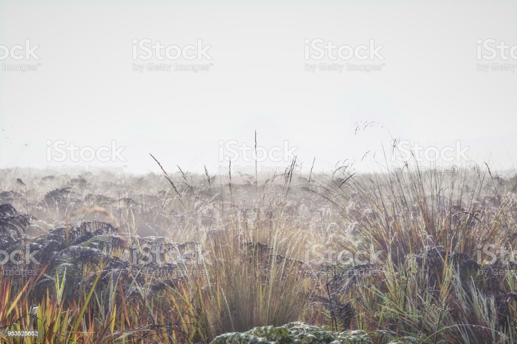 Dew on plants in morning fog stock photo