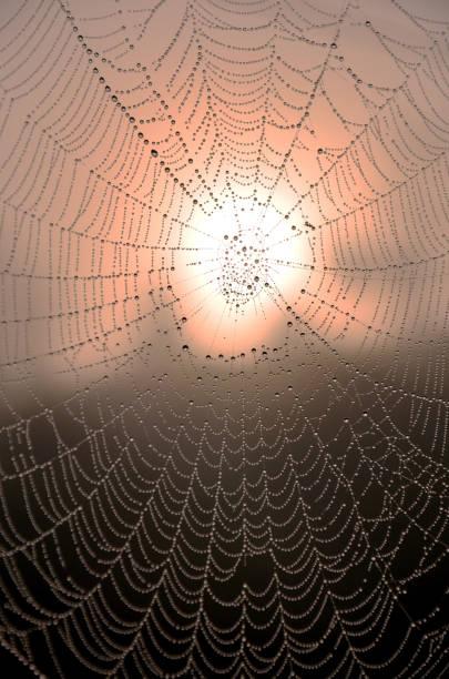 Rocío sobre la araña con la iluminación del sol en el exterior en vez de mañana - foto de stock