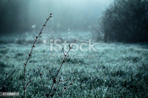 istock Dew on spiderweb 474368812