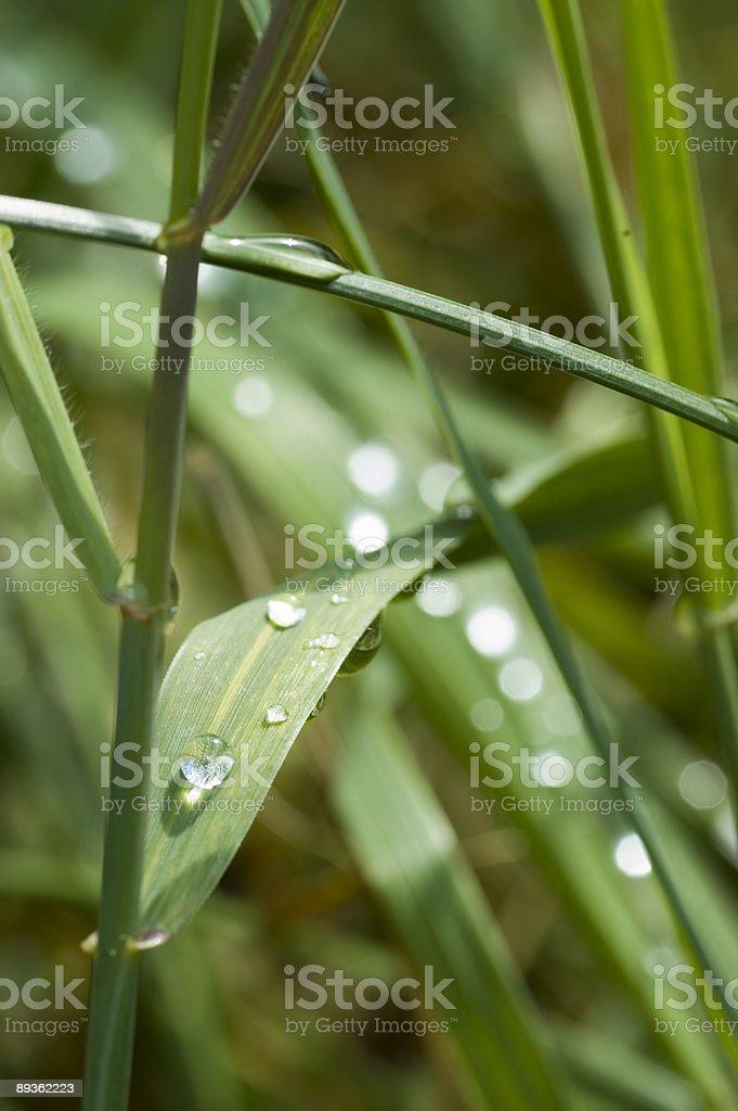 Rugiada sull'erba foto stock royalty-free
