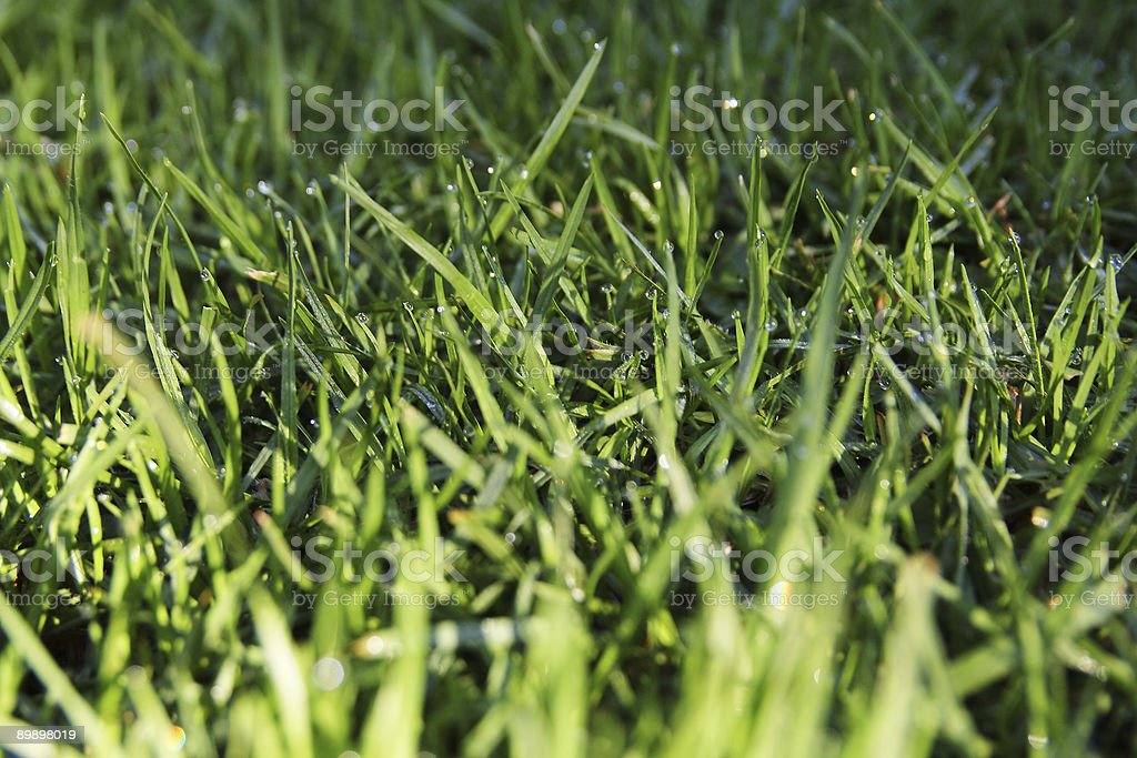 Dew on the Lawn two royalty-free stock photo