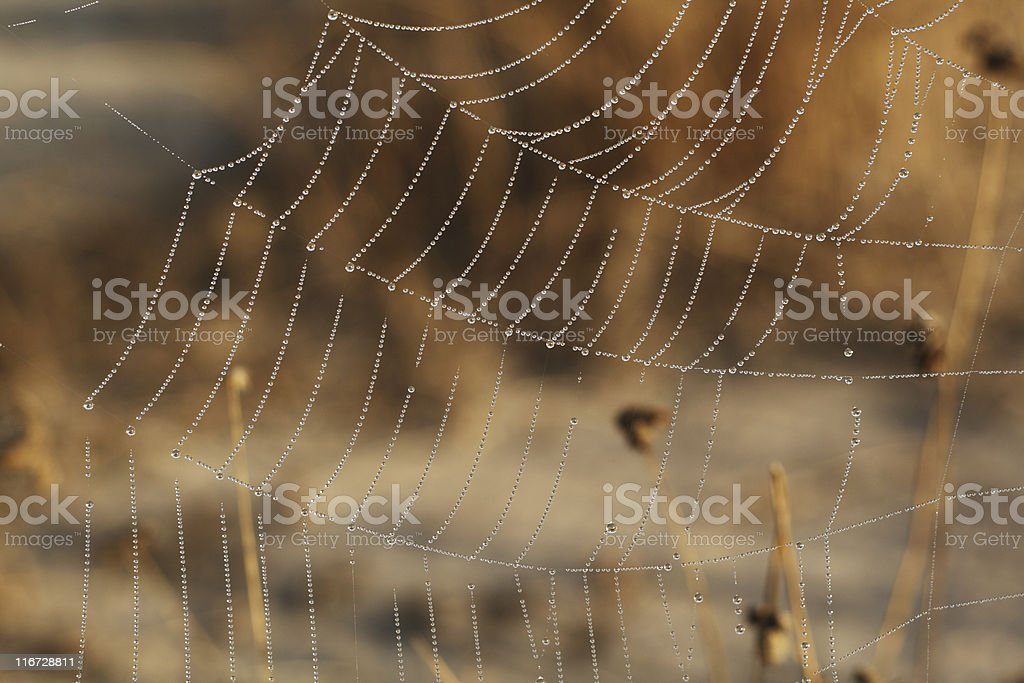 Dew royalty-free stock photo