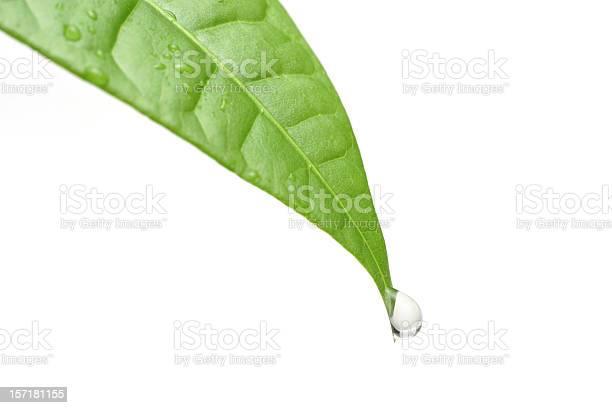 Photo of Dew