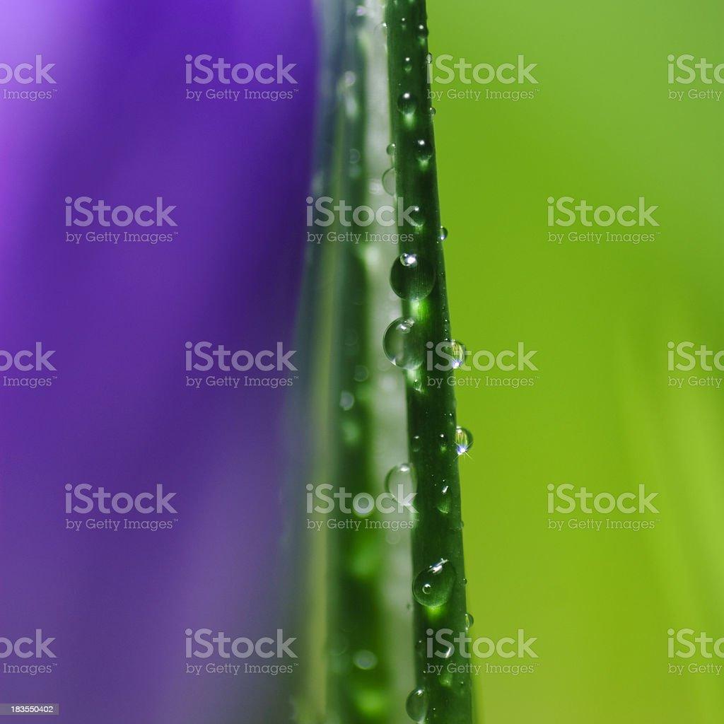 Dew royalty-free stock photo