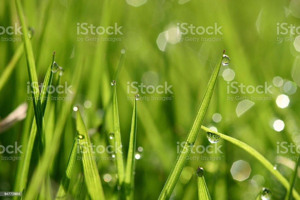 dew #2 stock photo