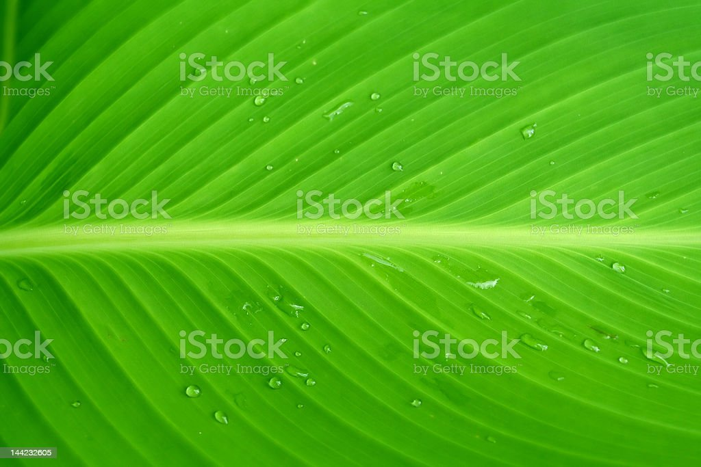 Dew - Water Drops on Foliage in the Morning royalty-free stock photo