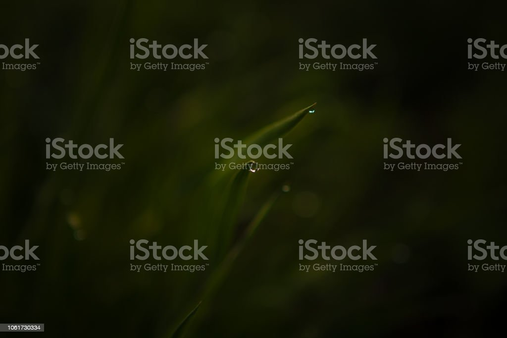 Dew water drops on grass stock photo