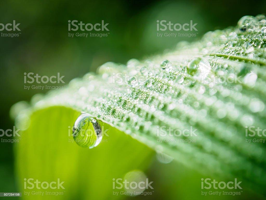 Gotas de orvalho/água na folha Verde Macro foto royalty-free