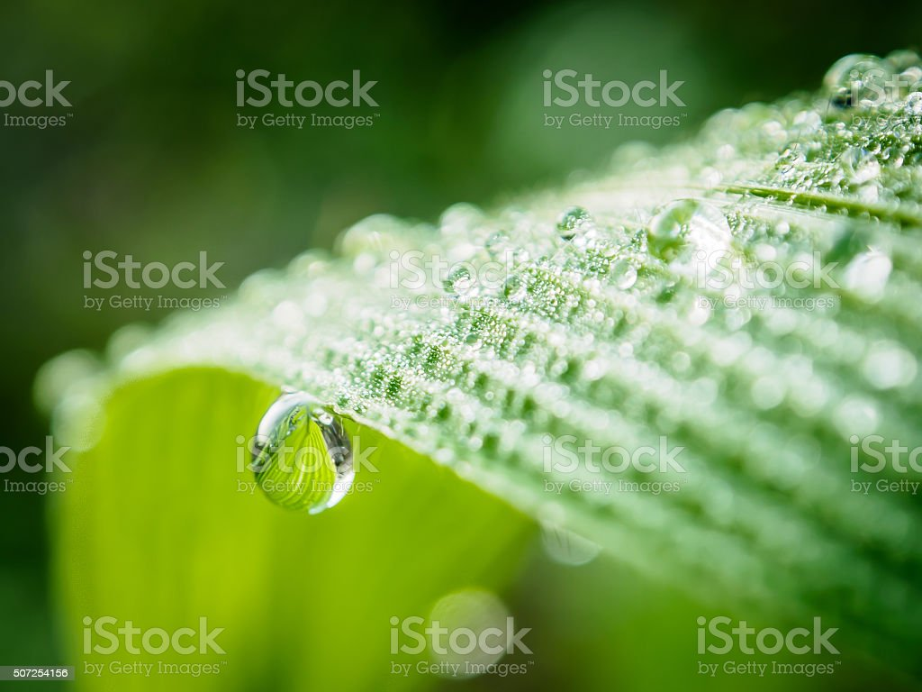 Dew / Water Drops on Green Leaf Macro stock photo