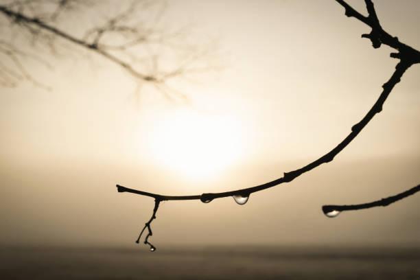 Dew_branches_fog_sunrise stock photo