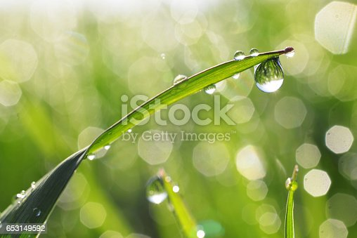 Fresh morning dew on grass