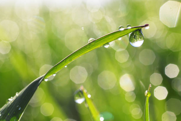 Dewdrops Fresh morning dew on grass raindrop stock pictures, royalty-free photos & images