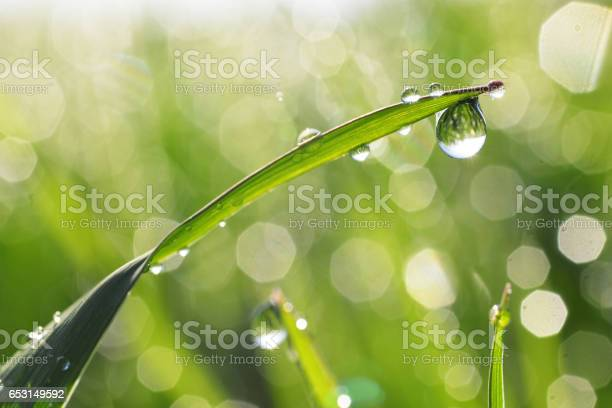 Photo of Dewdrops