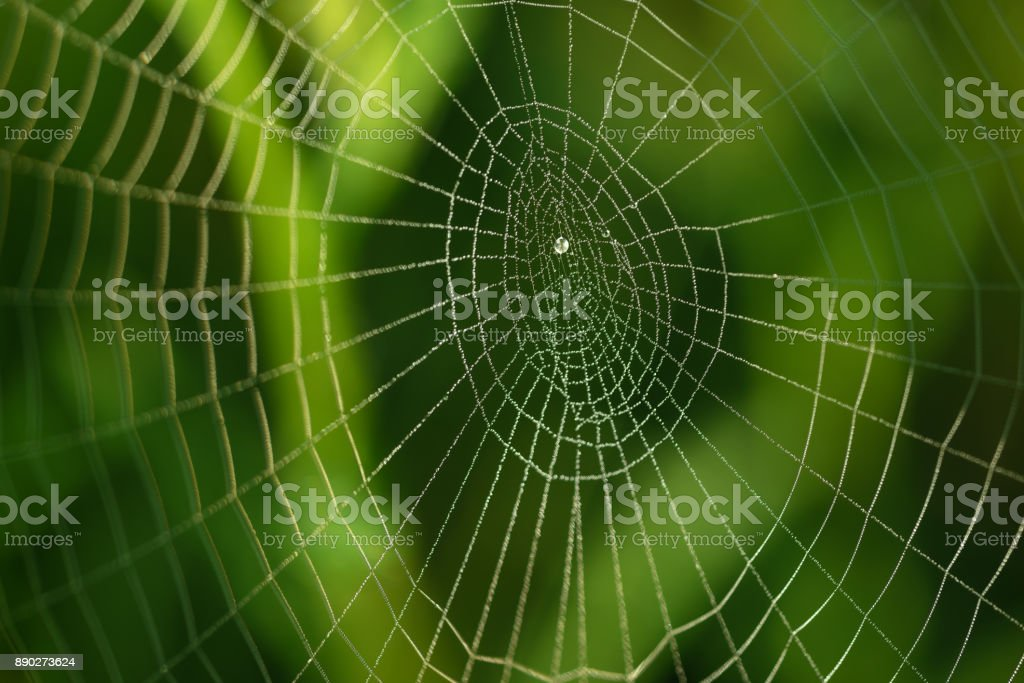 Dewprops on a cobweb at sunrise. Green foliage at the background stock photo