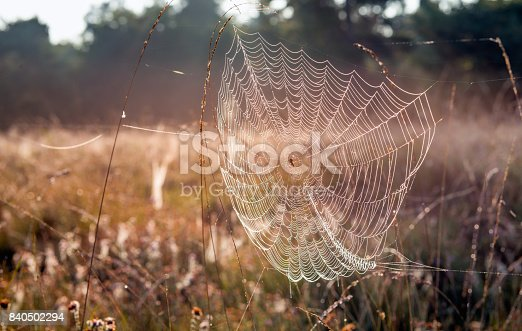 istock Dewy spider web between stems of grasses 840502294