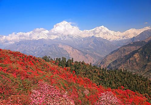Dhaulagiri Peak Spring