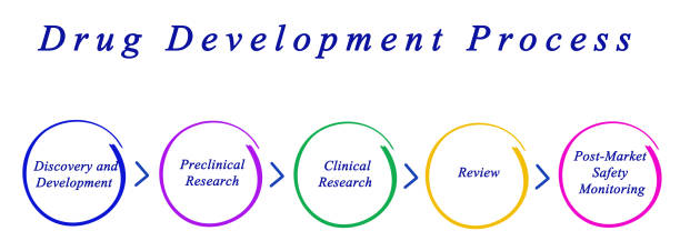 diagram of drug development process - fda stock photos and pictures