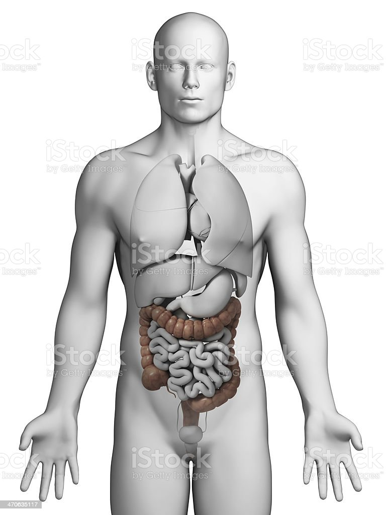 A Diagram Of The Human Colon On A Model Of A Human Stock Photo