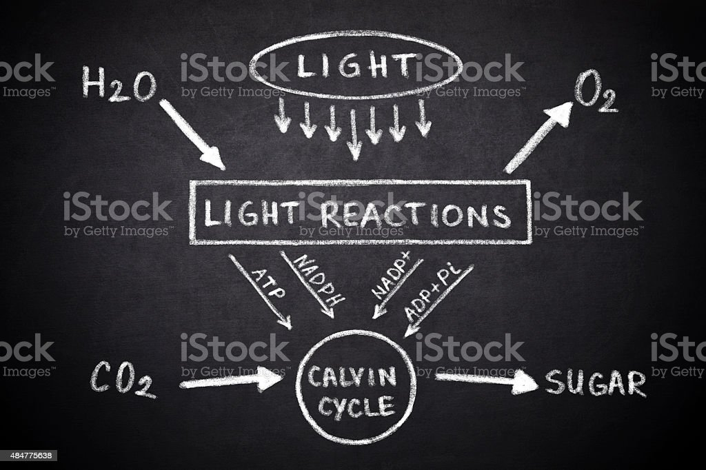 Diagram of the process of photosynthesis stock photo