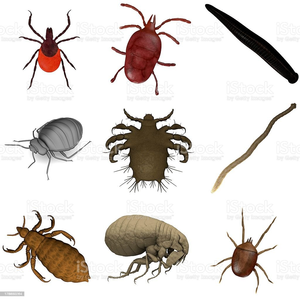 Diagram showing a variety of parasites stock photo