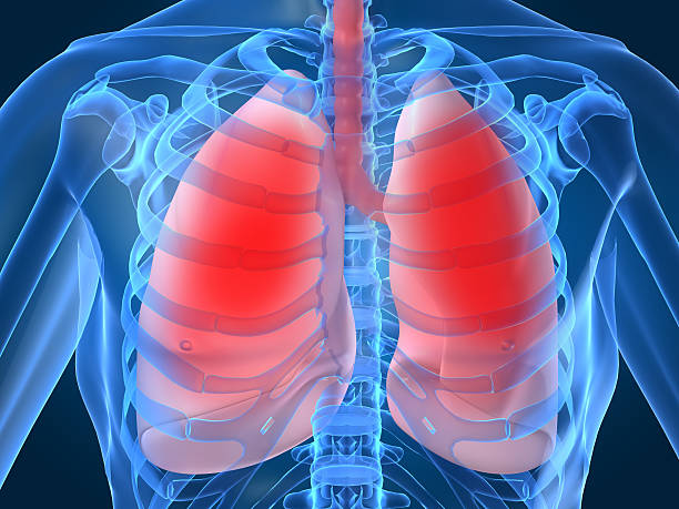 Royalty free human lung pictures images and stock photos istock diagram showing inflamed or infected lungs stock photo ccuart Images