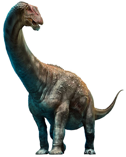 Diamantinasaurus Diamantinasaurus 3D illustration herbivorous stock pictures, royalty-free photos & images