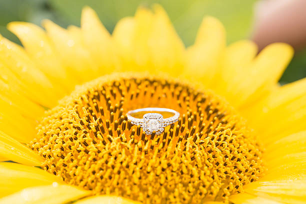 Diamond ring on a sunflower stock photo