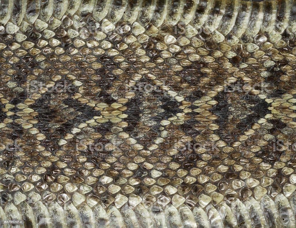 Diamondback Rattlesnake Pattern stock photo