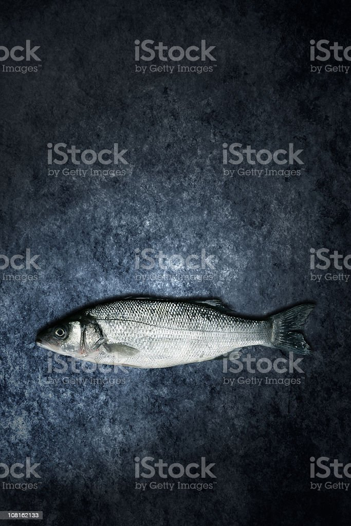 Dicentrarchus labrax - sea bass royalty-free stock photo