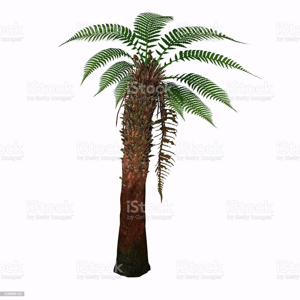 Dicksonia Tree stock photo