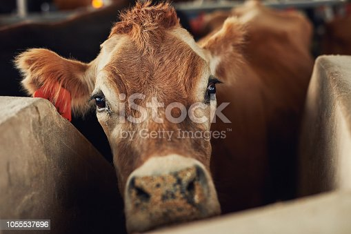 Shot of a herd of cattle on a dairy farm