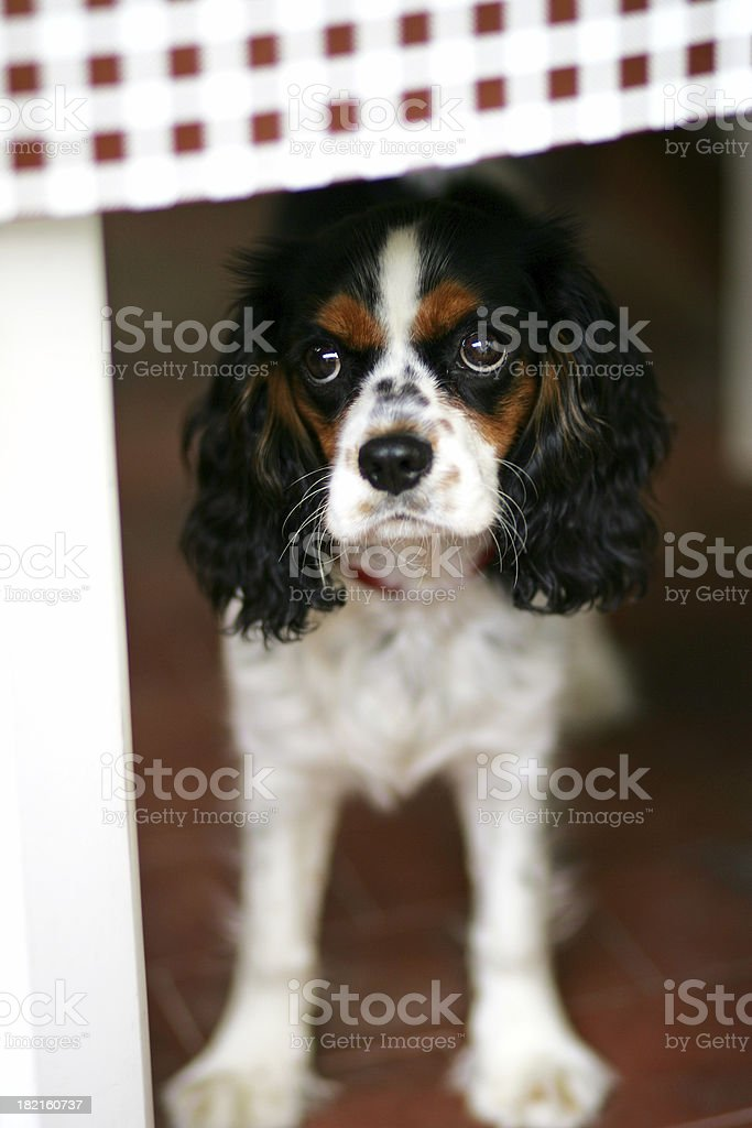 I didn't do anything ... royalty-free stock photo
