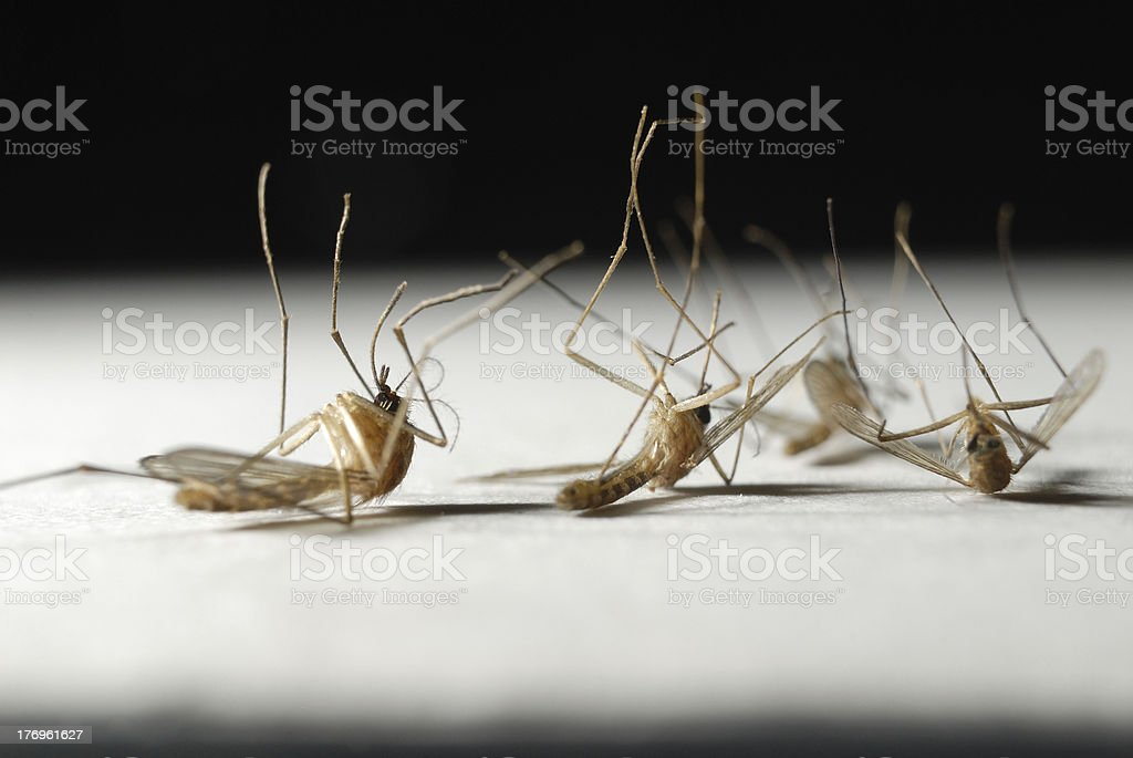 Die mosquitoes royalty-free stock photo