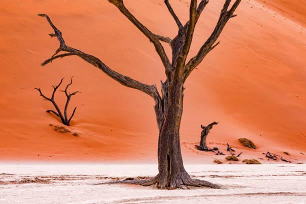 schöne tod in der wüste zu sterben - afrikanische steppe dürre stock-fotos und bilder