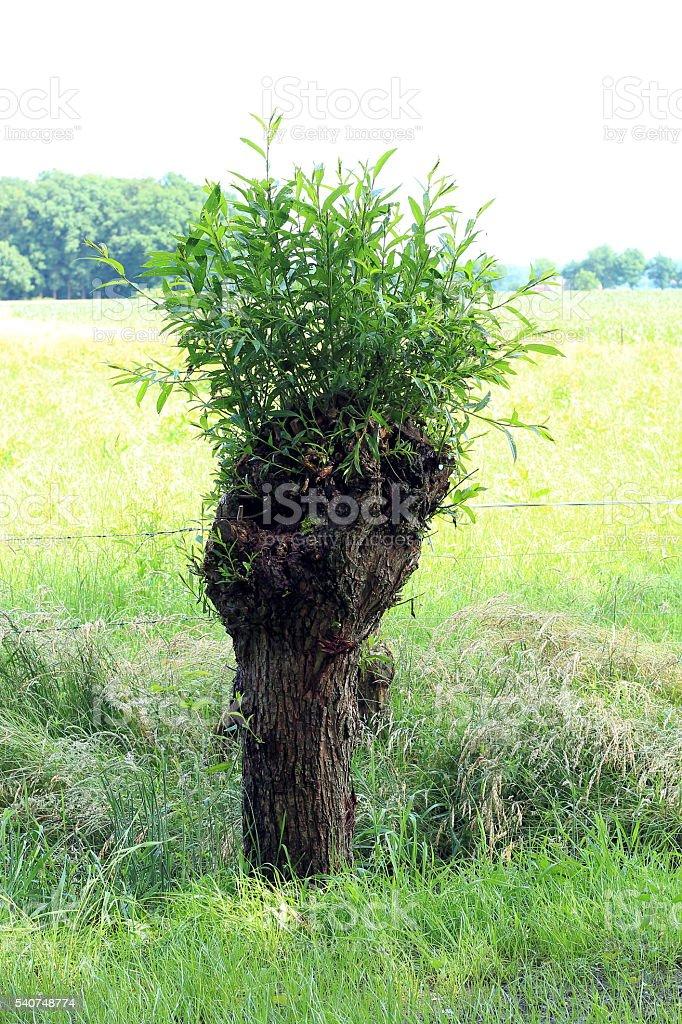 die Weide stock photo