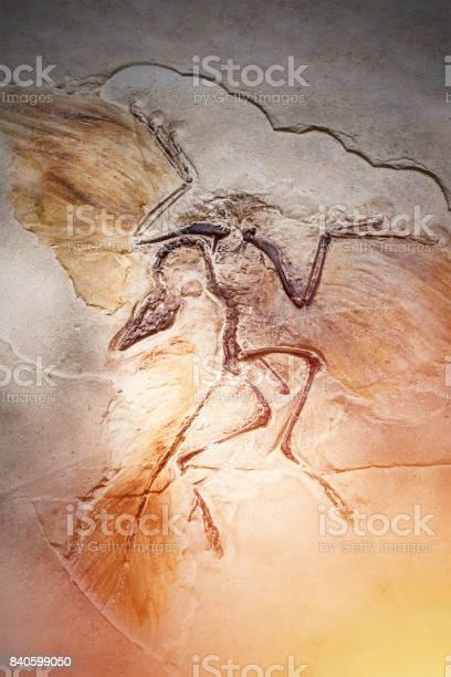 Died bird in stone fossil picture id840599050?b=1&k=6&m=840599050&s=612x612&h=silyskndcfprhlpnzqookhyrs ubhznn4ikz zd6b2g=