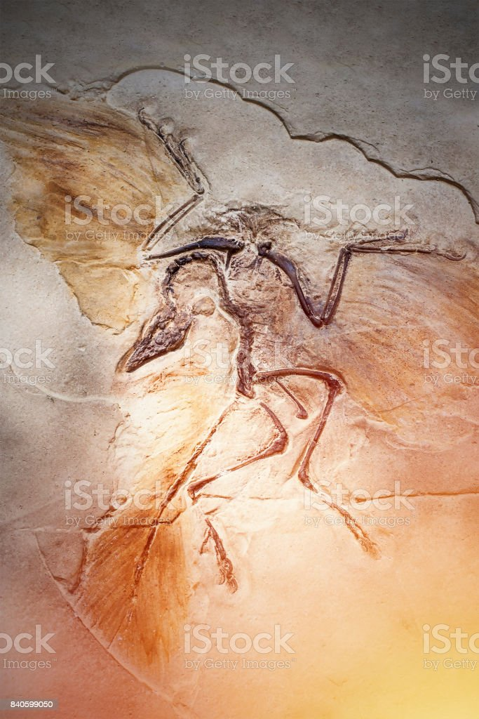 Died bird in stone fossil. stock photo
