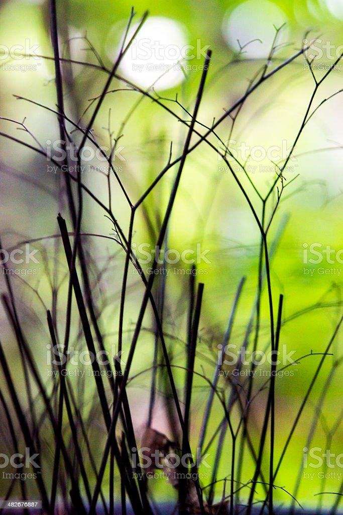 Died maidenhair fern royalty-free stock photo