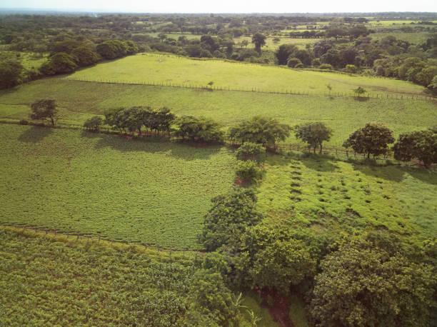 Différents champs verts agricoles - Photo