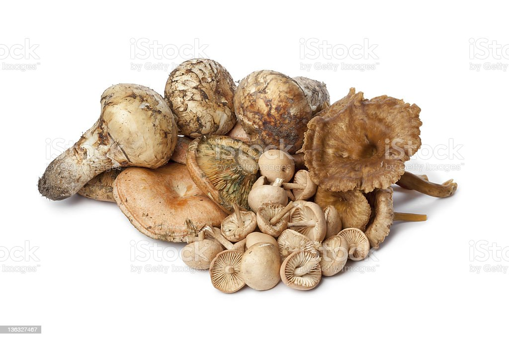 Different autumn mushrooms stock photo