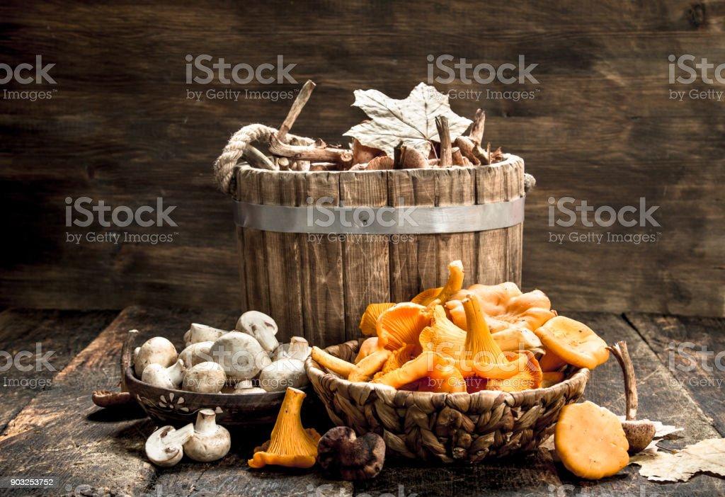 Different autumn mushrooms. stock photo