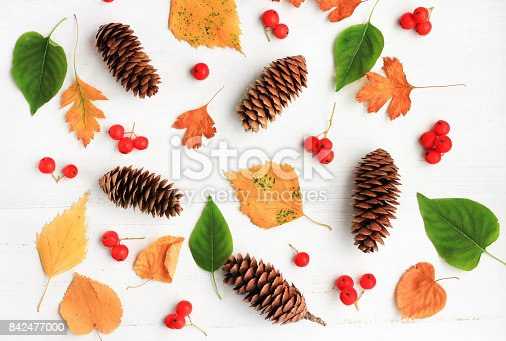 istock Different autumn themed bright natural elements - yellow leaves, spruce cones, red rowan berries, plant. 842477000