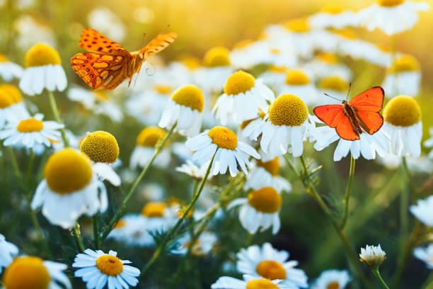 Different beautiful butterflies fluttering and sitting on a bright picture id1137591015?b=1&k=6&m=1137591015&s=612x612&w=0&h=izrsjsvxu6urwtpxcjyfmf15hcdzzvmg6xi5g7ubwxa=