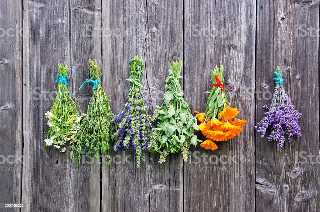 Different bouquets of herbs hanged to dry stock photo