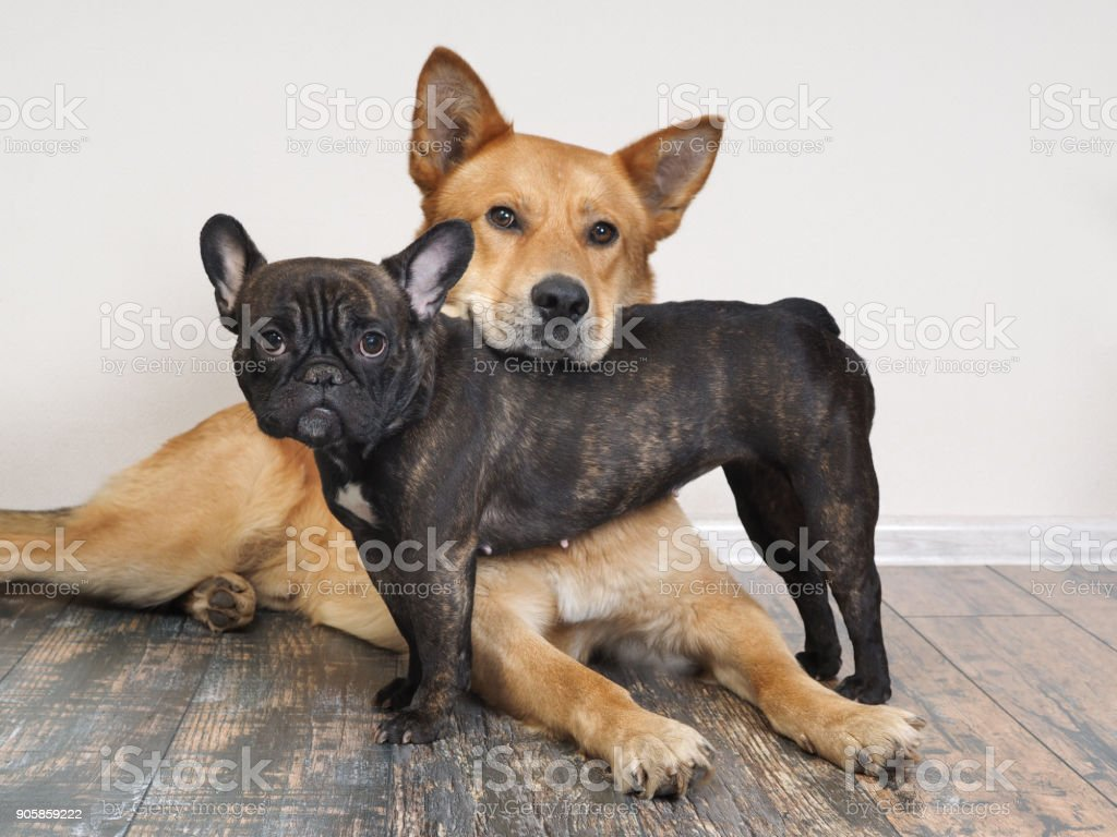 Different breeds of dogs in funny poses stock photo